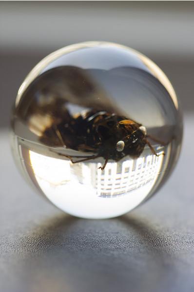 Kula akrylowa z owadem